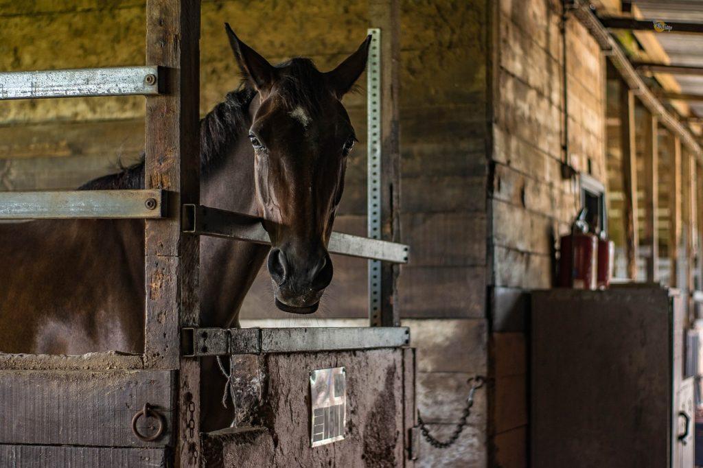 gérer stress cheval