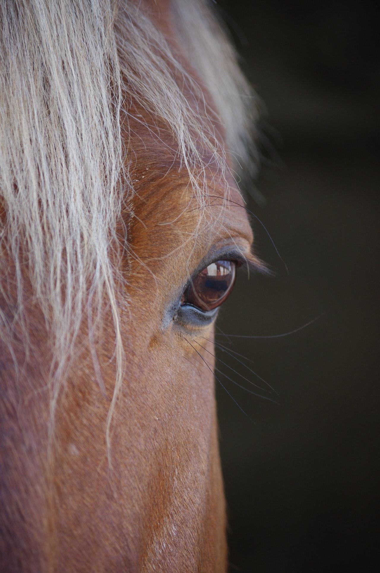 le cheval est-il intelligent ?