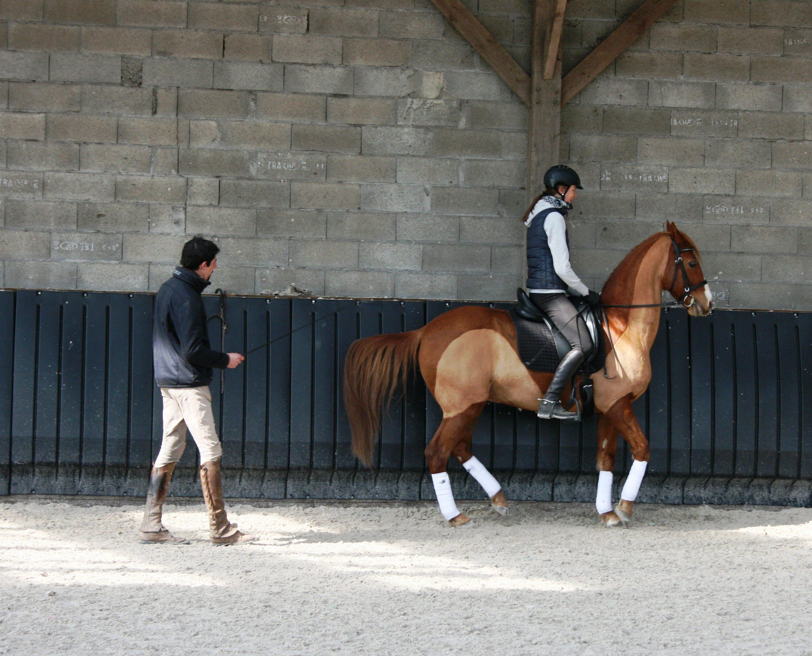 Métier de l'équitation